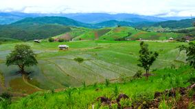 A paisagem da inclinação do campo do arroz do lapso de tempo de Hd inclina acima vídeos de arquivo