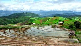A paisagem da inclinação do campo do arroz do lapso de tempo de Hd inclina para baixo filme