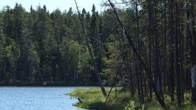 paisagem da Lago-floresta em Finlandia Floresta do pinho Fotografia de Stock