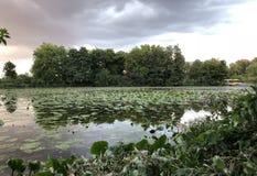 Paisagem da lagoa fotos de stock royalty free