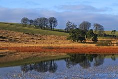Paisagem da lagoa Imagens de Stock Royalty Free
