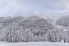 Paisagem da madeira do inverno Imagem de Stock