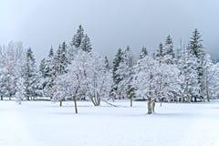 Paisagem da madeira do inverno Imagens de Stock