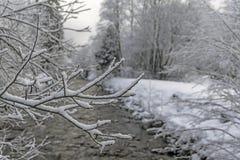 Paisagem da madeira do inverno Foto de Stock