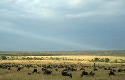 Paisagem da migração do Wildebeest Imagens de Stock