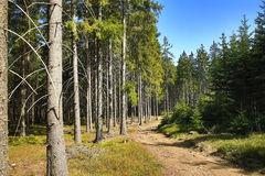Paisagem da mola, Špi?ák, estância de esqui, floresta boêmia (Šumava), República Checa Imagem de Stock