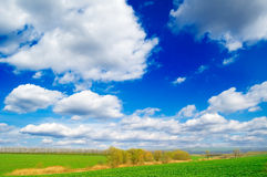A paisagem da mola. Fotos de Stock Royalty Free