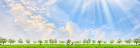 A paisagem da mola com árvores e o sol novos irradia no fundo do céu azul Fotografia de Stock