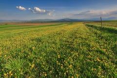 A paisagem da mola com dentes-de-leão amarelos floresce e céu nebuloso azul Fotos de Stock Royalty Free