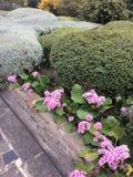 Paisagem da mola com flores fotografia de stock