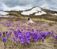Paisagem da mola com flores e cão Imagem de Stock Royalty Free