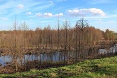 Paisagem da mola com muitos ramo dos amieiros e da lagoa Fotografia de Stock Royalty Free