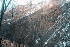 Paisagem da mola com neve e os pinheiros de derretimento imagens de stock royalty free