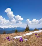 Paisagem da mola com o céu nebuloso e a flor Fotos de Stock Royalty Free