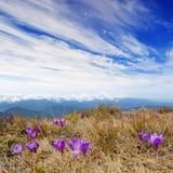 Paisagem da mola com o céu nebuloso e a flor Imagem de Stock Royalty Free
