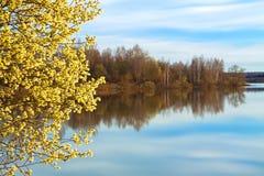 Paisagem da mola com uma árvore de florescência e o rio fotografia de stock royalty free