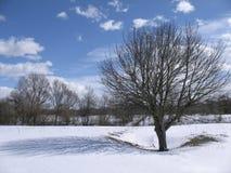 Paisagem da mola com uma árvore, uma sombra e umas nuvens em um dia ensolarado fotos de stock royalty free