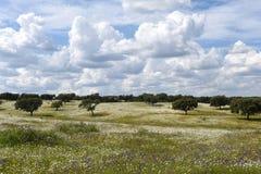 Paisagem da mola da paisagem do Alentejo entre a vila do Fl Fotos de Stock