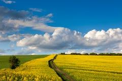 Paisagem da mola de campos coloridos, do céu azul e da estrada da terra Imagens de Stock
