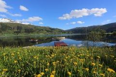 Paisagem da mola de Noruega - flores das sagacidades do lago e snowly das montanhas no primeiro plano Imagens de Stock