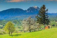 Paisagem da mola e campos verdes na Transilvânia, Holbav, Romênia, Europa Fotos de Stock