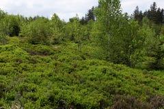 Paisagem da mola - Forest Hiking preto no trajeto de Lothar na Floresta Negra, Alemanha fotos de stock