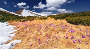 Paisagem da mola nas montanhas Foto de Stock