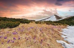 Paisagem da mola nas montanhas Fotografia de Stock