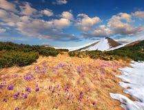Paisagem da mola nas montanhas Fotografia de Stock Royalty Free