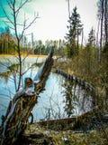 Paisagem da mola no reservatório na região de Kaluga em Rússia foto de stock royalty free