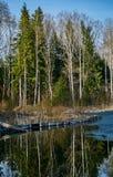 Paisagem da mola no reservatório na região de Kaluga em Rússia fotografia de stock