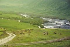 Paisagem da montanha, carneiro do rebanho Foto de Stock