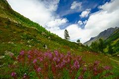Paisagem da montanha com flores Foto de Stock Royalty Free