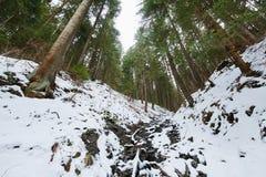 Paisagem da montanha com madeiras de pinho no inverno Fotografia de Stock