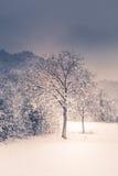 Paisagem da montanha com neve, árvores cobertos de neve Imagens de Stock