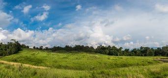 A paisagem da montanha, com os picos de montanha cobertos com a floresta Foto de Stock
