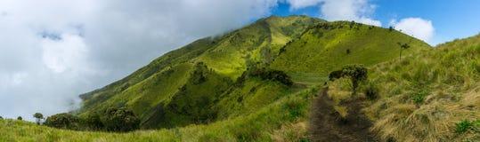 Paisagem da montanha com panorama do fundo da árvore e do céu de grama Imagens de Stock