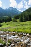 A paisagem da montanha com rio Foto de Stock