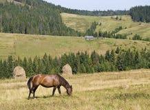 Paisagem da montanha com um cavalo Fotos de Stock Royalty Free