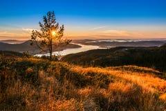 Paisagem da montanha com um pinheiro solitário no crepúsculo fotos de stock royalty free