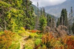 Paisagem da montanha da floresta Fotos de Stock