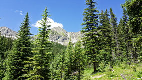 Paisagem da montanha de Colorado imagem de stock