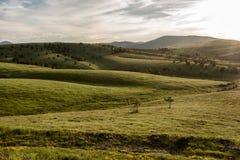 Paisagem da montanha de Zlatibor imagem de stock