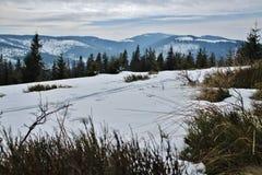 Paisagem da montanha do inverno Imagens de Stock Royalty Free