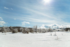 Paisagem da montanha do inverno com a nuvem do céu do pinheiro da neve fotografia de stock royalty free