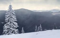 Paisagem da montanha do inverno com pinheiros cobertos de neve foto de stock