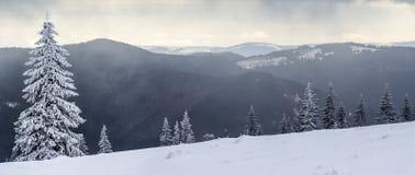 Paisagem da montanha do inverno com pinheiros cobertos de neve fotos de stock