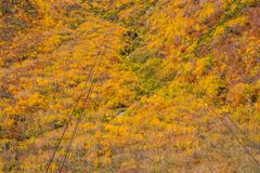 Paisagem da montanha do outono e do ropeway do teleférico, rota alpina, cumes de Tateyama Japão foto de stock royalty free