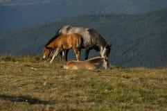 Paisagem da montanha e cavalos selvagens em Balcãs centrais, planina de Stara, em Beklemeto ou na passagem Trojan Fotografia de Stock Royalty Free
