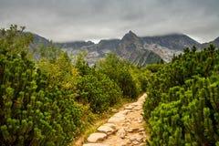 Paisagem da montanha em um dia nebuloso Imagens de Stock Royalty Free